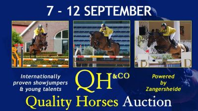 Quality Horses Auction