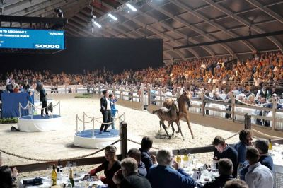 New record set at Zangersheide Quality Auction