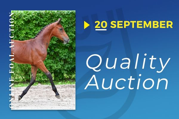 Zangersheide Quality Auction 20/9/2019