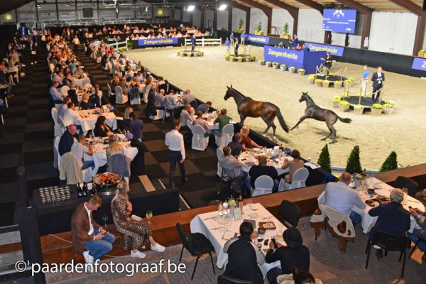 Average of € 34,333 for Zangersheide Quality Auction on Saturday